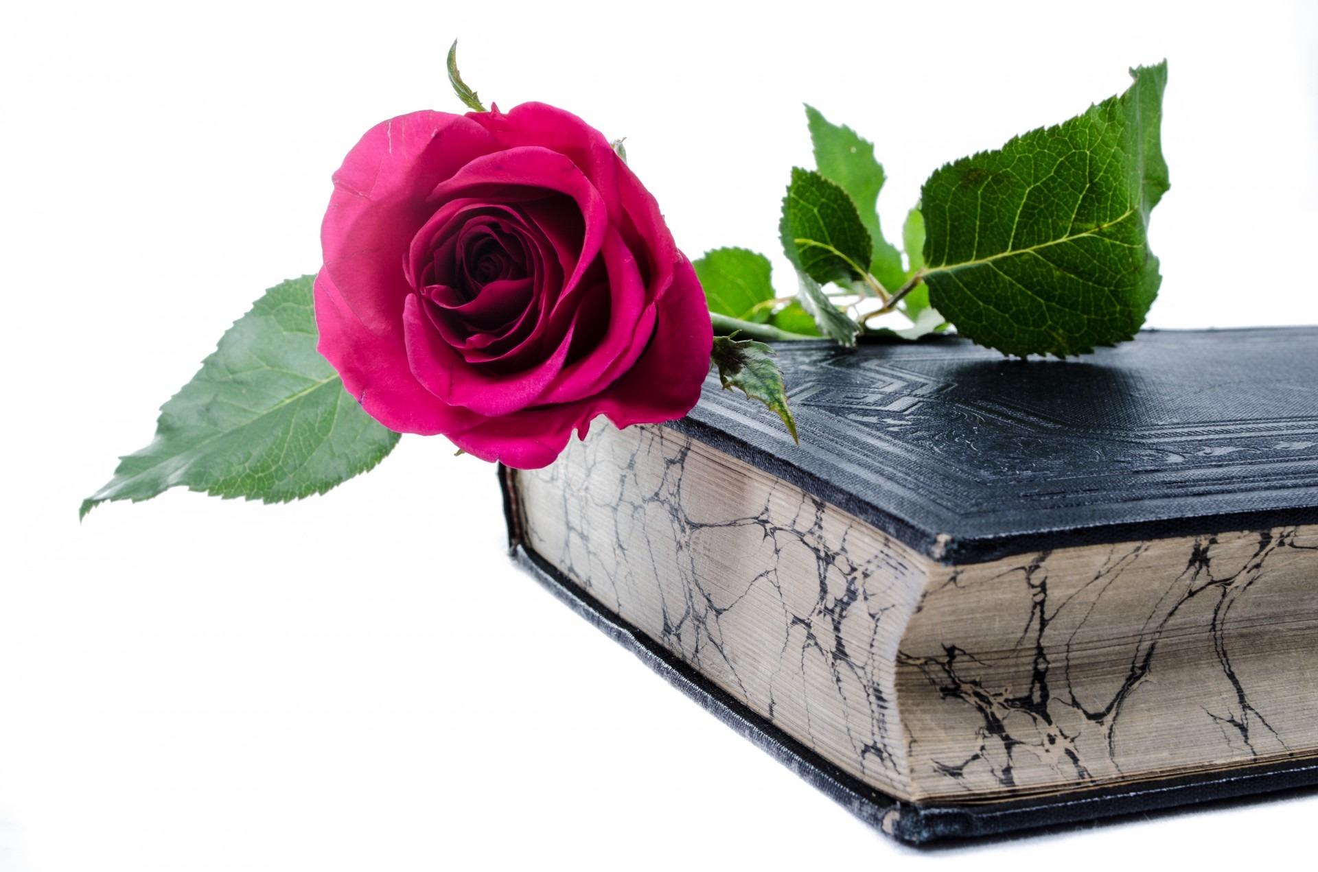 ulubieni autorzy książek