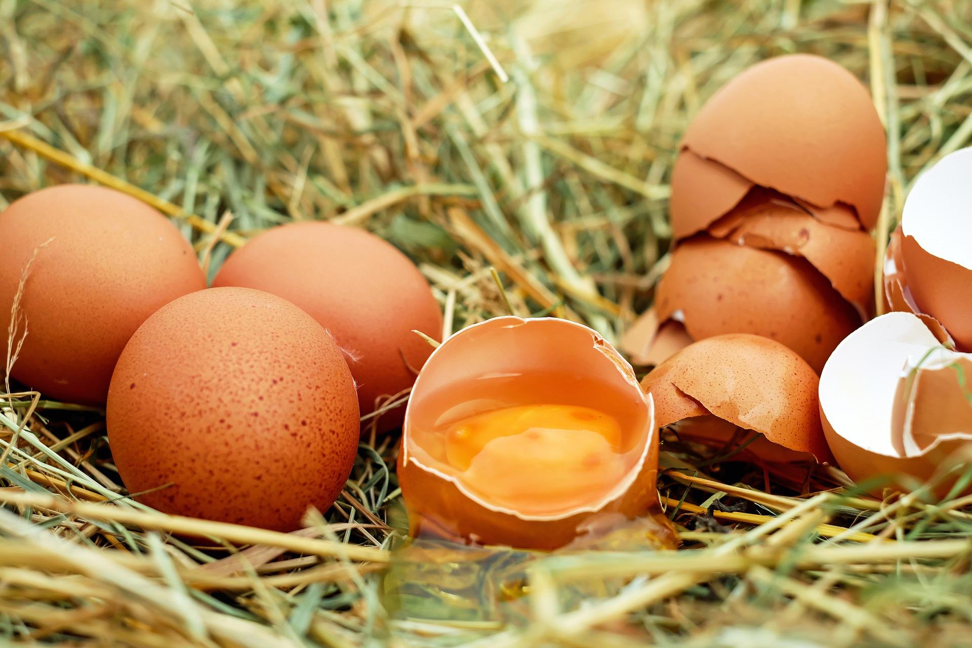 jajka od szczęśliwych kur