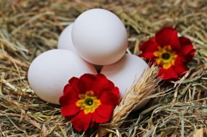 jajka ekologiczne